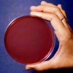 Logo del gruppo di Antibiotici e antifungini